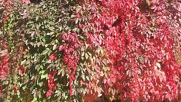 Herbst in der Safran Drogerie