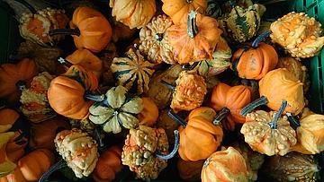Mit Kuerbis als Safran Drogerie-Herbstgruesse