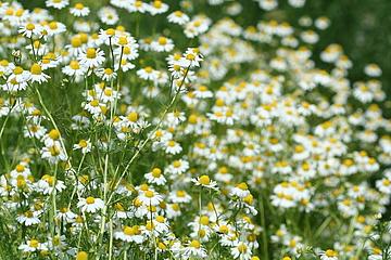 Blumenstrauss der Natur